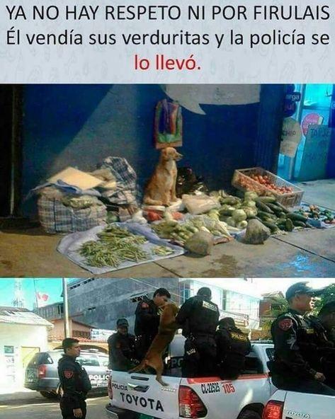 Alv Firulais El Perro Brayan Fuscionado Con El Kevin Memes Funny Spanish Memes New Memes