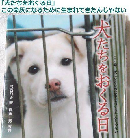 殺処分された犬 猫の気持ち 繁殖犬猫の犠牲ゼロ 殺処分ゼロを実現するサイト 殺処分 犬 猫