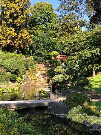 Traumhaftes Wohnen Im Garten Mit Wunderschoner Japanischer Bepflanzung Von Rheingrun Garten Japanischer Garten Japanische Pflanzen