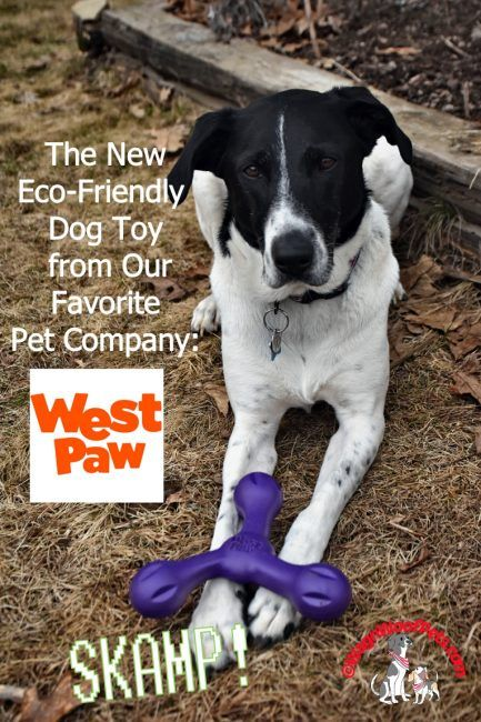 Skamp The New Interactive Versatile Dog Toy From West Paw