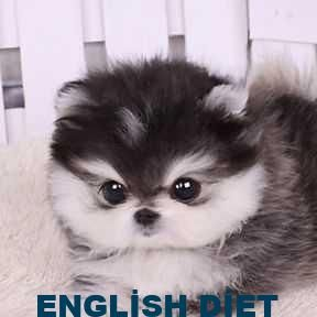 Pomeranian Miniature Black And White Dog Black Dog Miniature Pomeranian White Fluffy Dogs Puppy Breeds Cute Puppies