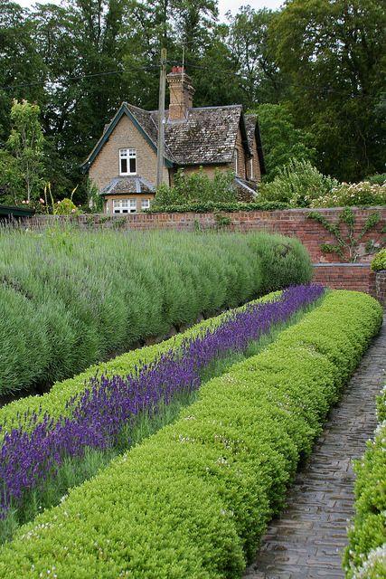 Lavender Garden By Jojo 77 On Flickr Lavender Garden Cottage Garden Outdoor Gardens
