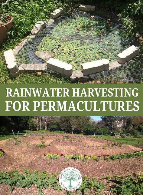 # permaculture gardening Rainwater Harvesting for Permacultures * The Homesteading Hippy Forest Garden, Rain Garden, Dream Garden, Organic Farming, Organic Gardening, Gardening Tips, Sustainable Gardening, Gardening Supplies, Vegetable Gardening