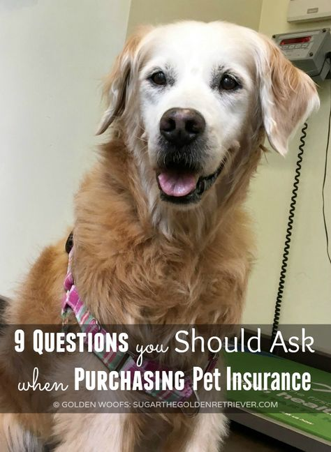 Do You Have Pet Insurance Petsbest Dog Insurance Pet
