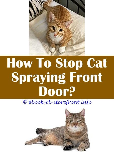 male cats spray poop