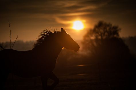 Wild Horse Running Art Photography Print - Sunset - Dusk - Black Horse by Francesco Formisano