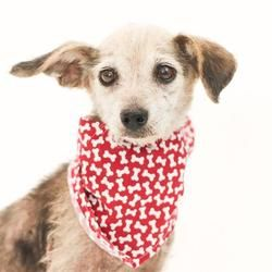 Available Pets At Orange County Animal Services In Orlando Florida Pets Dog Pounds Dachshund Adoption