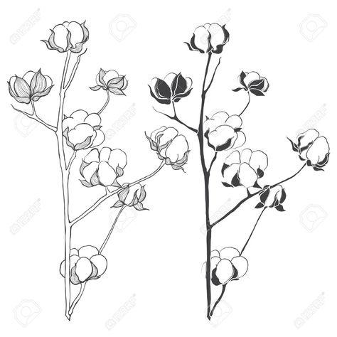 Planta De Algodon Para Dibujar Buscar Con Google Con Imagenes Planta De Algodon Dibujos Plantas