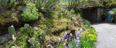 Vegetaliser Un Talus Amenager Une Butte Fleurir Un Jardin En