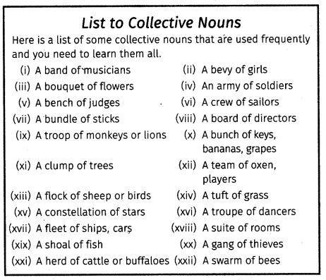 Cbse Class 7 English Grammar Noun Nouns English Grammar Collective Nouns Cbse grade english grammar worksheets
