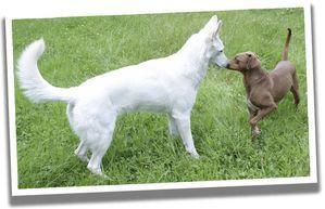 Top 10 Hunde Irrtumer Martin Rutter Dogs Schwerin Animalrescue In 2020 Hunde Hunde Erziehen Haushund