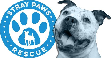 Adopt And Foster Rescue Dogs In St Louis Missouri With Stray Paws