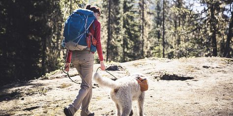 Wilderness Emergency Canine Care
