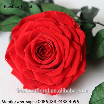 Gambar Bunga Mawar Untuk Profil Wa Tahan Lama Abadi Mawar Dengan Shap Baik Diawetkan Bunga Mawar Segar Alami Buy Raksasa Diawetkan Kering Rose Bunga Uku Rosas