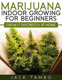 Spectacular Beginners Growing Marijuana Indoors