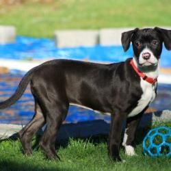 Adopt Speck On Dog Friends Dogs Animal Rescue