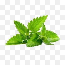Green Mint Leaves Mint Leaves Mint Green Leaves Png And Vector With Transparent Background For Free Download Free Watercolor Flowers Leaf Photography Flower Png Images