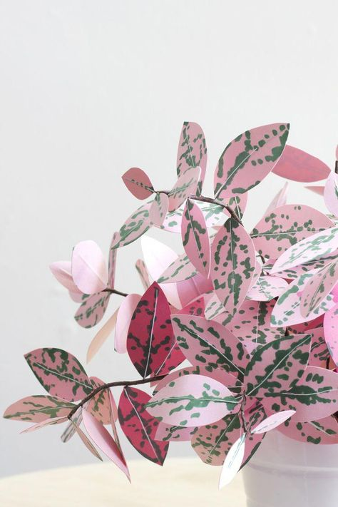 Corrie_Beth_Hogg_paper_plant_polkadot_close #houseplantsindoor