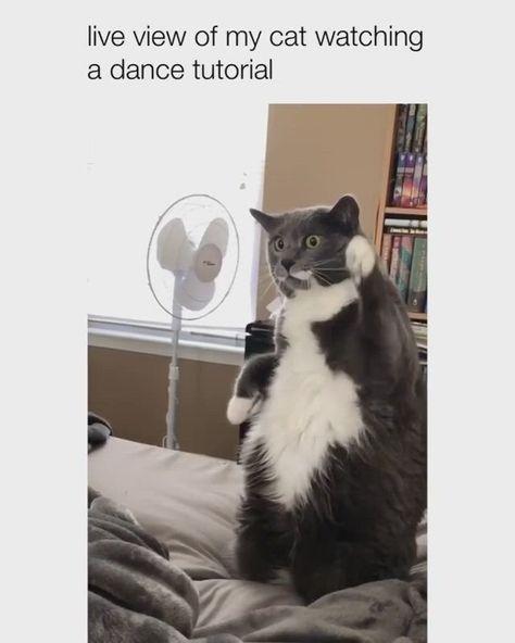 #cats #cat #catlover #meow #kitten #pets #kitty #catlovers #kittens #cute #animals #pet #cutecat #cutecats #ilovecats #kittycat #catslover #catvideos #catvideo