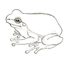 Billedresultat For Frog Line Drawings Frog Drawing Frog