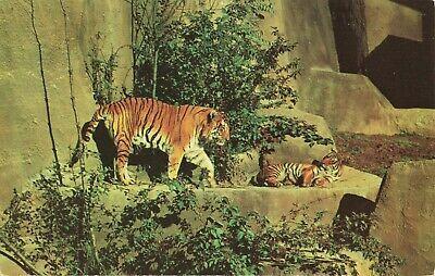 Postcard Tigers Woodland Park Zoo Seattle Washington Woodland Park Zoo Woodland Park Mt Rainier National Park