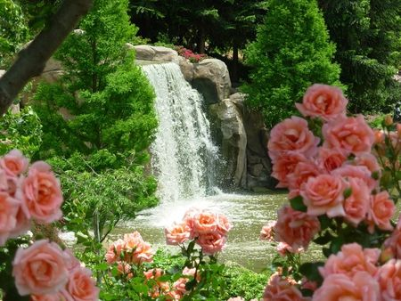 Pink Rose Garden Wallpaper rose garden - roses wallpapers and images - desktop nexus groups
