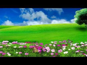 Hd 1080p Nature Flower Scenery Video Royalty Free Landscape Video 573 Youtube Smoke Animation Green Screen Backgrounds Wedding Graphics