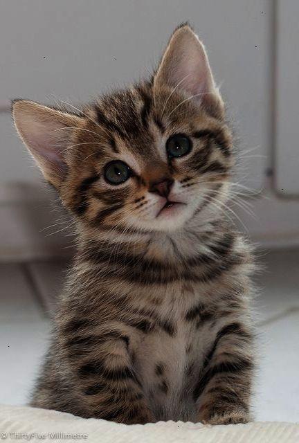 ahh cute cats breeds