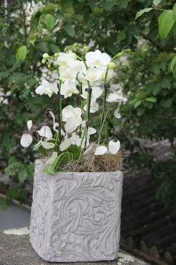 Phalaenopsis Orchideen in weiss Deko Tipps und mehr
