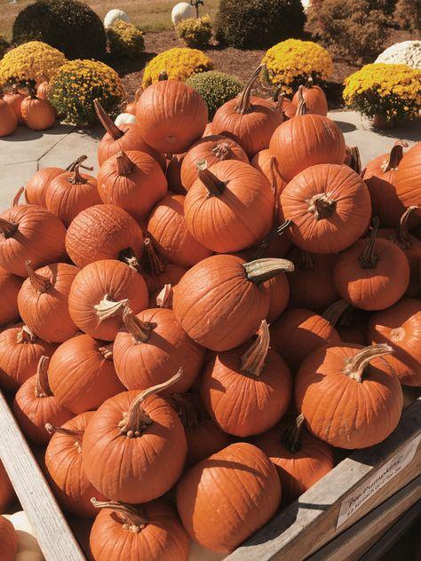 Primitive Folk Art  PRINT ONLY 8x10 Hello Fall Red Wagon Pumpkin Path