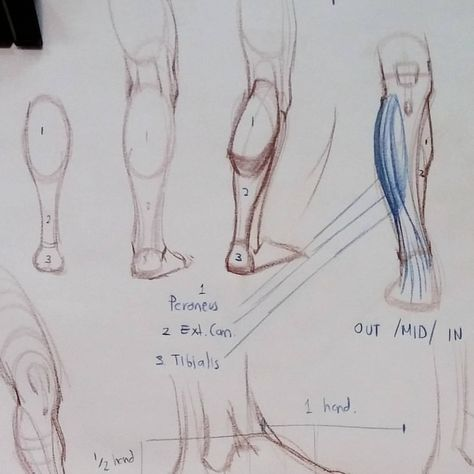 figure The back of the leg is not...