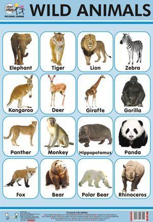 Animals Chart Wildwild Animals Chart Wild Animals Pictures Animals Wild Wild Animals List