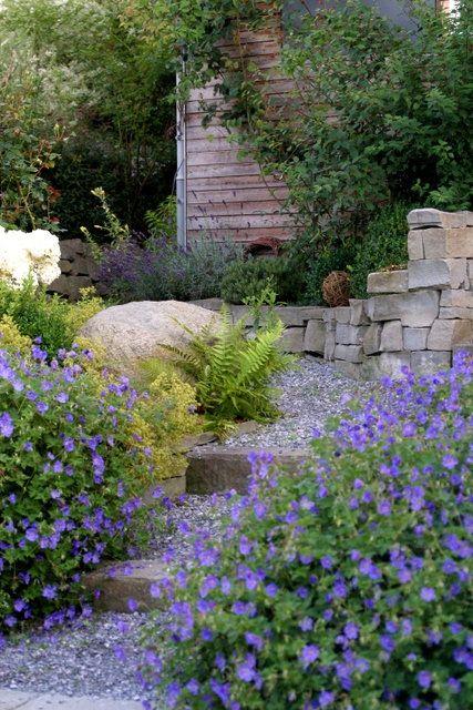 Im Garten Mit Mitglied Cosmea Im Sommer Leben Wir Praktisch Draussen Sloped Garden Modern Garden Geranium Rozanne