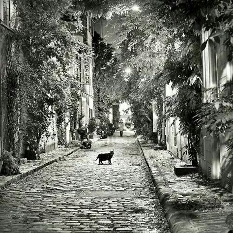 French cat on Wisteria Lane