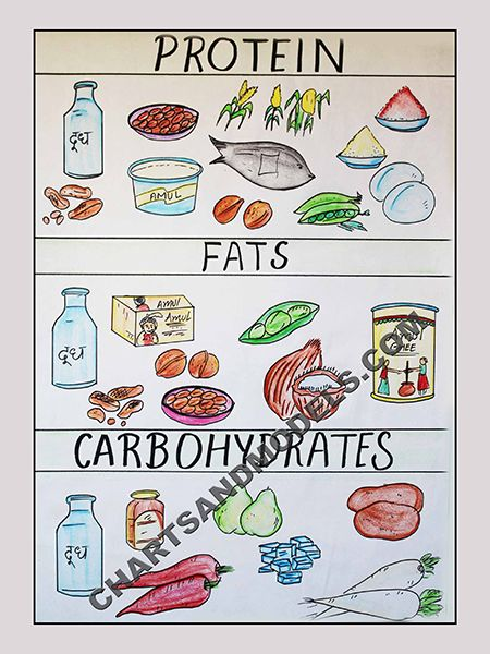 Buy Proteins, fats \ carbohydrates in Food Charts Online Buy - food charts