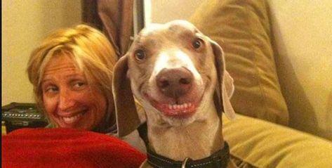 smiling dog - like owner like dog smile #smilingdogs #happydogs #funnydogs #smilingdogphotos #smilinganimals
