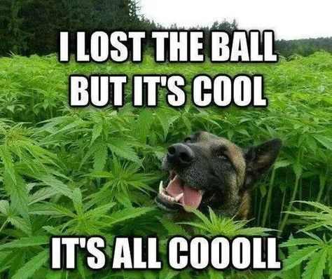 Image result for weed dog meme