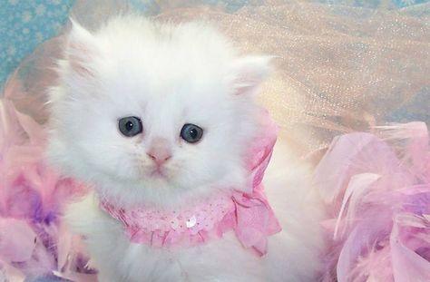 Terpopuler 30 Gambar Kartun Kucing Lucu Cute Kittens Cats Cats Wallpaper 38179611 Fanpop Page 11 Download Vektor Bahan Di 2020 Cute Kittens Kucing Lucu Hewan Lucu