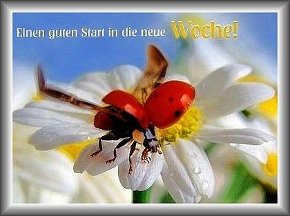 Monday Montag Grüße Guten Morgen Bilder Sprüche Und