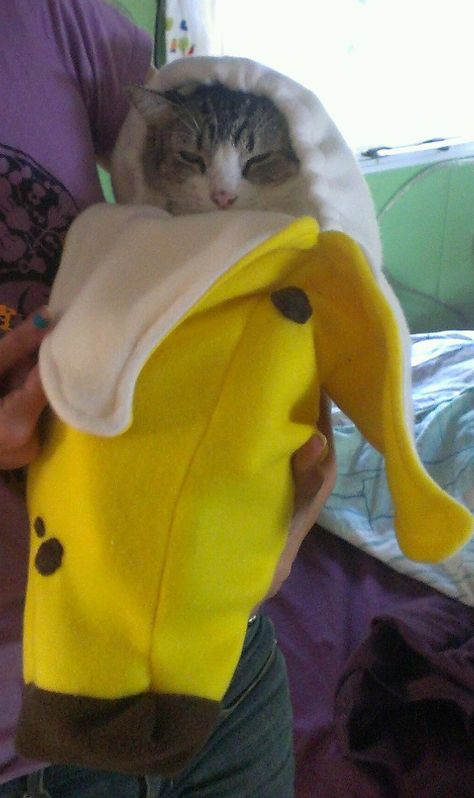 I made a banana costume for a baby shower. Our cat didnt hate it. Find Cute things to Pin here //don.greymafia.com/?pu003d15937 | Cats u0026 Friends ... & I made a banana costume for a baby shower. Our cat didnt hate it ...