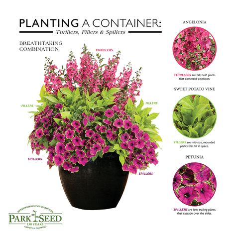 Vegetable & Flower Seeds, Plants, Bulbs, Trees & Gardening Supplies