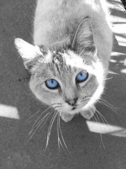 31 Trendy Cats And Kittens Names Blue Eyes Cats Grey Cats Cat With Blue Eyes Kitten Names