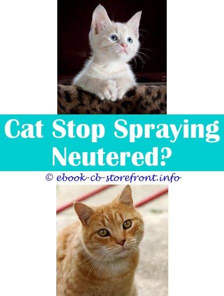 4f95e8ac442817f9416d7beb579c04c2 - How To Get Rid Of Cat Spray Smell Under House