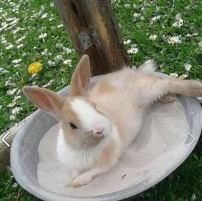 Maden Im Kaninchenstall Kaninchen Ungeziefer