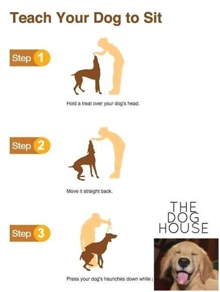 Dan Morris Dog Training Grooming Dog Training Queen Creek Az