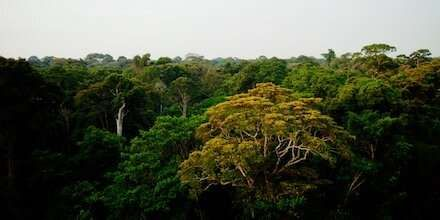 Satellite Study Of Amazon Rainforest Land Cover Gives Insight Into