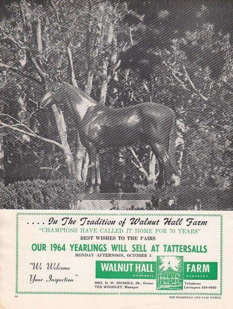 1964 Walnut Hall Horse Farm Lexington Ky Ad Champions Have Called