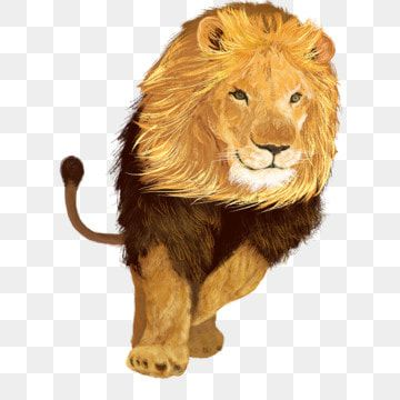 Wild Fierce Lion King Lion King Clipart Wild Animals Animal Png Transparent Clipart Image And Psd File For Free Download Animals Wild Fierce Lion Lion Cat