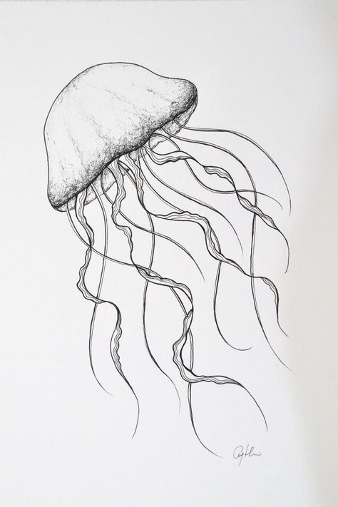 minimal jellyfish drawing, fine line artwork, ocean life by First Light Art Jellyfish Drawing, Jellyfish Painting, Jellyfish Tattoo, Watercolor Jellyfish, Jellyfish Quotes, Jellyfish Aquarium, Jellyfish Sting, Tattoo Watercolor, Jellyfish Light