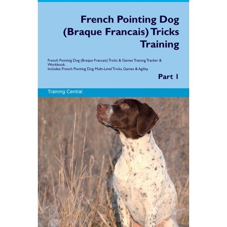 French Pointing Dog Braque Francais Tricks Training French